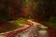 Red leaves and a road through the forest during autumn Stock Image