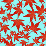 Red leaves seamless pattern, vector background. Autumn  on a blue . For the design of wallpaper, fabric, decoration. Red leaves seamless pattern, vector Stock Photos