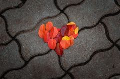 Red leaves in the shape of heart lie on the concrete tile. Stock Photos