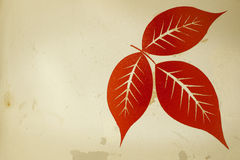 Red leaves texture. Red leaves on a ground steel tank white retro art Stock Photography