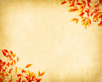 Red leaves tree with old grunge antique paper Stock Photo