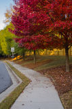 Red Leaves on Tree in Suburban Neighborhood Stock Photo