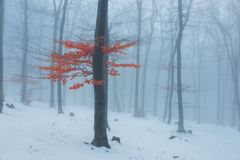 Red leaves tree in winter foggy forest. Snow covered woods stock image