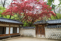 Red leaves on trees above buildings. Red and green leaves on trees above buildings and stone wall at the Changdeokgung Palace in Seoul, South Korea royalty free stock image