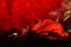 Red leaves with various shades of red and smoke Royalty Free Stock Photo