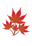 Red leaves - vector Stock Photography
