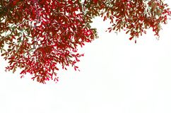 Leaves white background Royalty Free Stock Image