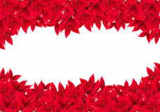 Red leaves on white background Royalty Free Stock Photos