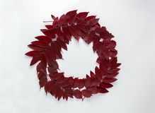 Red leaves  on the white background. Top view, flat lay. Copyspace. Stock Photo