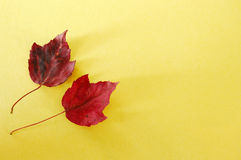 Red Leaves Yellow Paper Royalty Free Stock Image