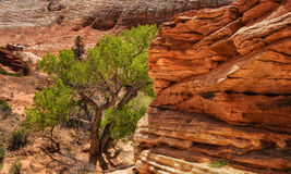 The Red Ledge By the Cottonwood Tree Royalty Free Stock Photography
