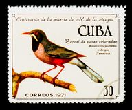 Red-legged Thrush Turdus plumbeus ssp. rubripes, 100th ann. of death of R. de La Sagra serie, Cuban circa 1971 Royalty Free Stock Images