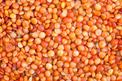 Red lentils Stock Image