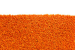 Red lentils , isolated Stock Image