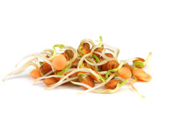 Red lentils sprouts. Isolated on white background Royalty Free Stock Photography