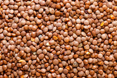 Red lentils texture background. Macro, close-up view Stock Image