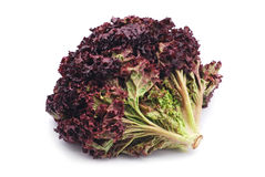 Red lettuce. On white background royalty free stock image