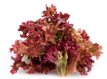 Red lettuce. Red leaf lettuce on white background Royalty Free Stock Images