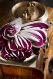 Red lettuce Stock Image