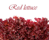 Red lettuce Stock Photo