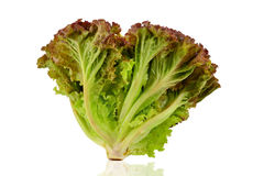 Free Red Lettuce Stock Images - 32402784