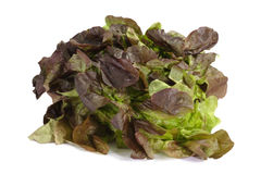 Red Lettuce Royalty Free Stock Photography