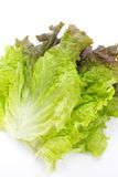Red lettuce Stock Photos