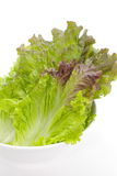 Red lettuce Stock Image