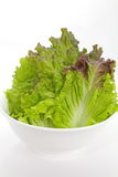 Red lettuce Royalty Free Stock Photo