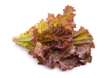 Red lettuce leaves Royalty Free Stock Image