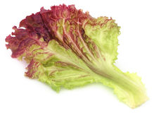 Red lettuce over white background Stock Photo