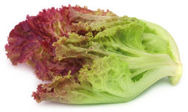 Red lettuce over white background Royalty Free Stock Images