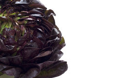 Red lettuce. Studio photography. Sourced from the farm Royalty Free Stock Photos