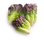 Red lettuce Stock Images