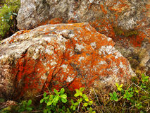Red Lichen. On stone surface in mountains royalty free stock photos