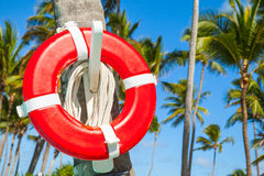 Red life buoy hanging on palm tree Stock Image