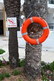 Red lifebuoy hanging on palm tree with caution plate No diving. An hotel pool area. Red lifebuoy hanging on palm tree with caution plate No diving. An hotel royalty free stock photo