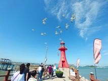 Red lighthouse sea gulls stock images
