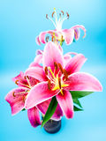 Red lilies Royalty Free Stock Photo