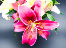 Red lilies in front of blue background Stock Photography
