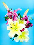 Red lilies in front of blue background Stock Photos