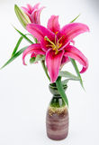 Red lilies in front of white background Royalty Free Stock Photography