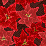 Red Lilies Pattern Royalty Free Stock Photos