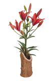 Red lilies in a wooden vase isolated on white Stock Image