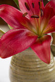 Red Lily in ceramic handmade vase Stock Images