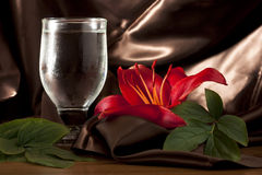 Red Lily with Glass Royalty Free Stock Images