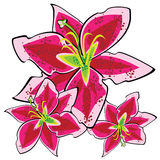 Red lily isolated on white stock illustration