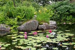 Free Red Lily Pond Stock Photo - 1004380