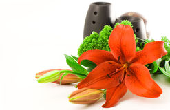 Red Lily Scent. Red lily and black oil burner isolated on white background Stock Photos