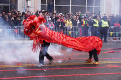 Red Lion Dancing on the Fire Crackers Royalty Free Stock Photography